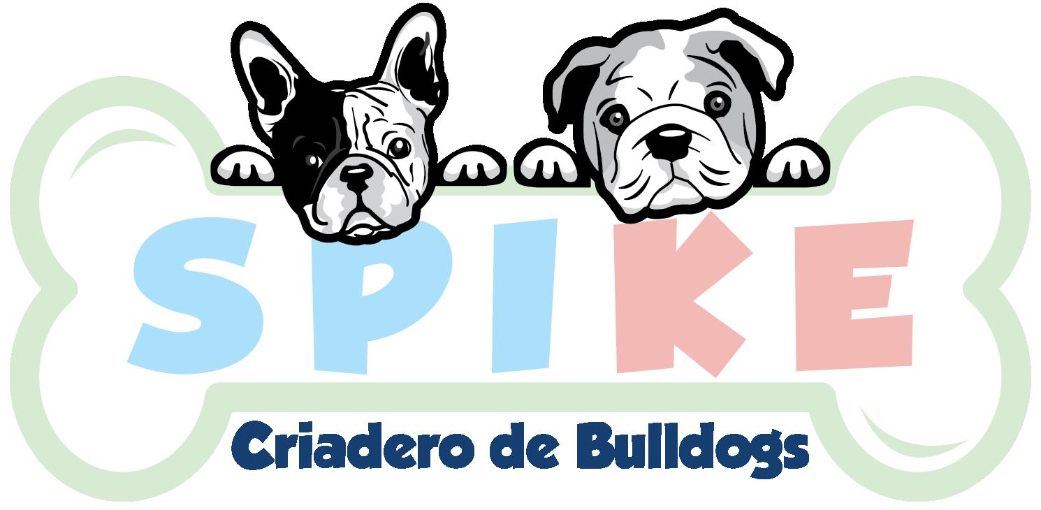 Cachorros Bulldogs Criadero Spike GDL